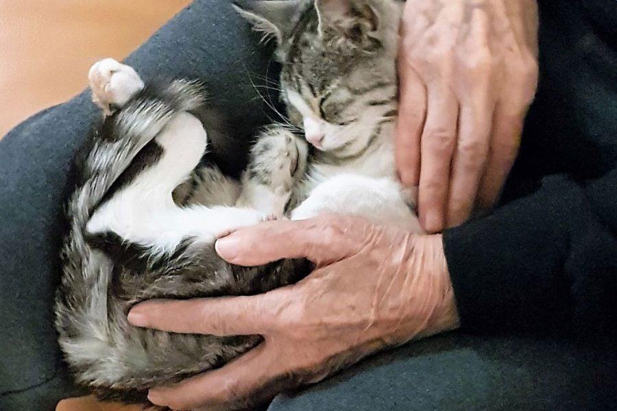 Malenoj maci pronašli smo dom…