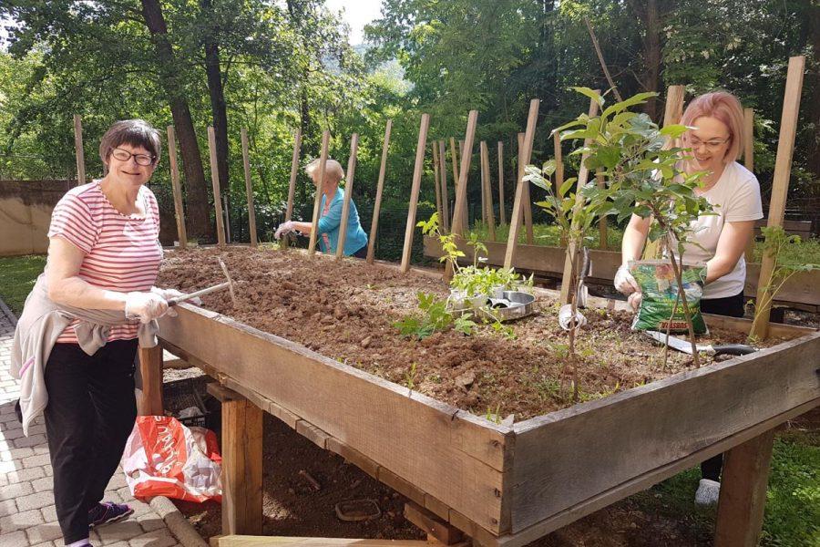 Uređivanje vrta u Domu